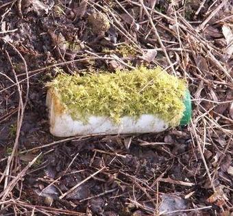 Bote abandonado cubierto de musgo