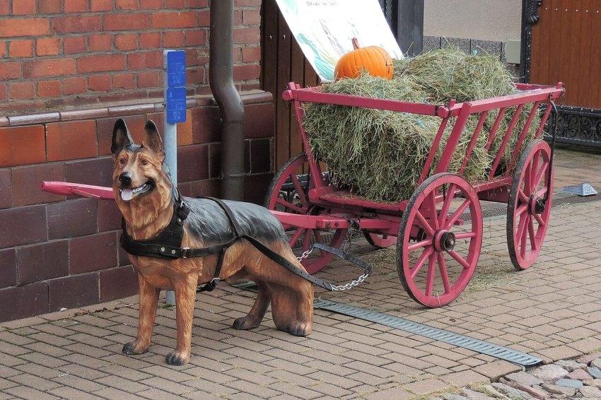 hund bollerwagen ziehen