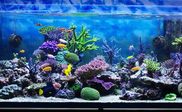Resultado de imagem para peixe aquario