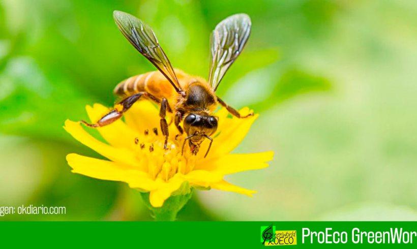 El 41 % de los insectos del mundo está en declive