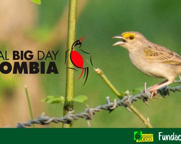 Colombia es campeón mundial del avistamiento de aves por cuarta vez