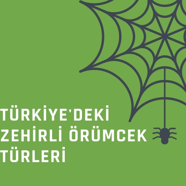 Türkiye'deki Zehirli Örümcek Türleri ve isimleri