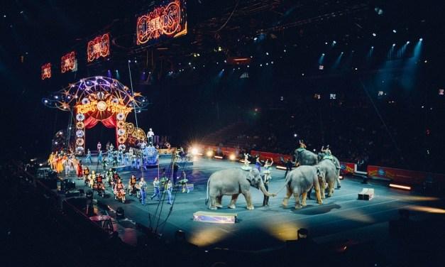 André-Joseph Bouglione : «Pour les animaux, la cage, c'est la prison à perpétuité»