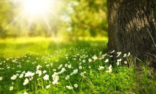 17 octobre 1930 : «C'est vraiment merveille d'allier tant de printemps et de maturité !»