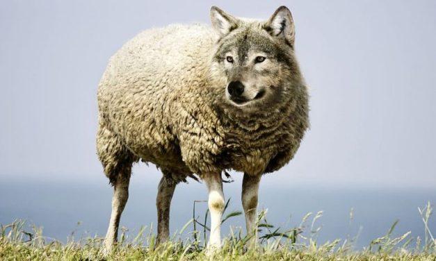 «Le loup dans la bergerie» de Jean-Claude Michéa: une critique lumineuse et vivifiante de l'horreur capitaliste