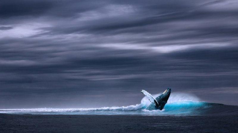 1er avril 1867 : la grosse baleine d'avril de Rossini