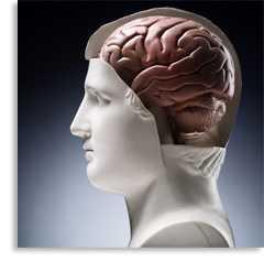 Psychology (Introduction)