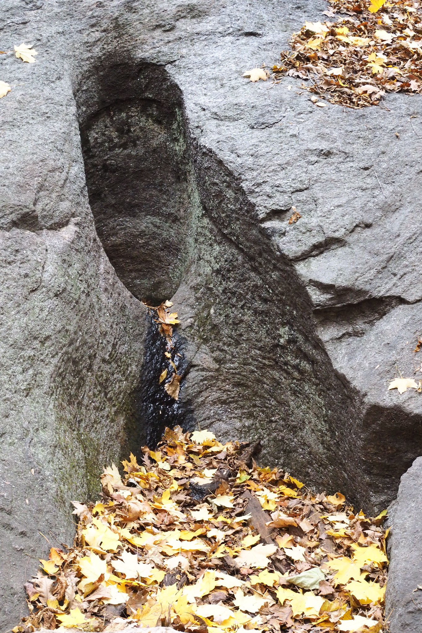 One of the Glacial Potholes at Inwood Hill Park