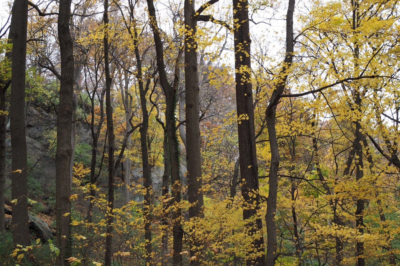 Trees at Inwood Hill Park