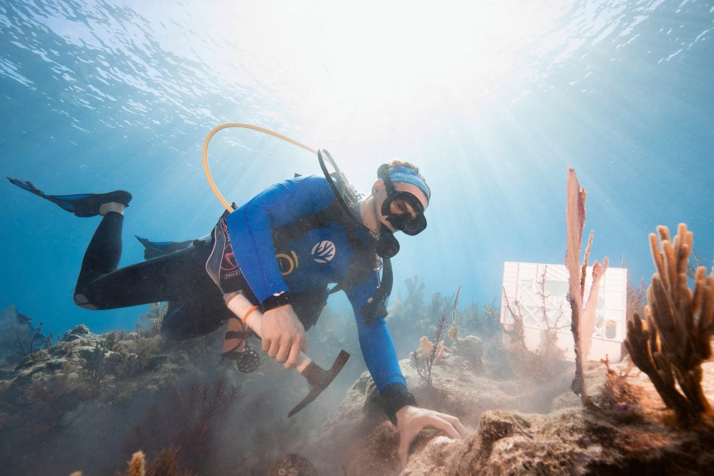 Carysfort Reef restoration by diver
