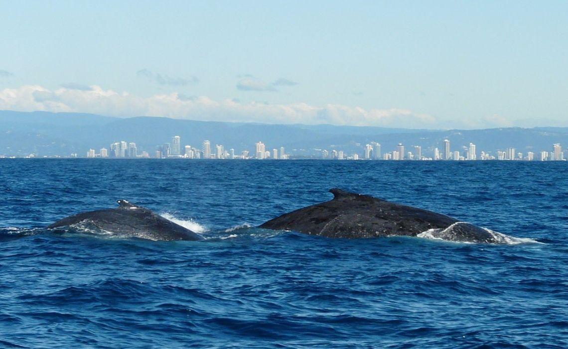 Delfini e balene parlano in dialetto