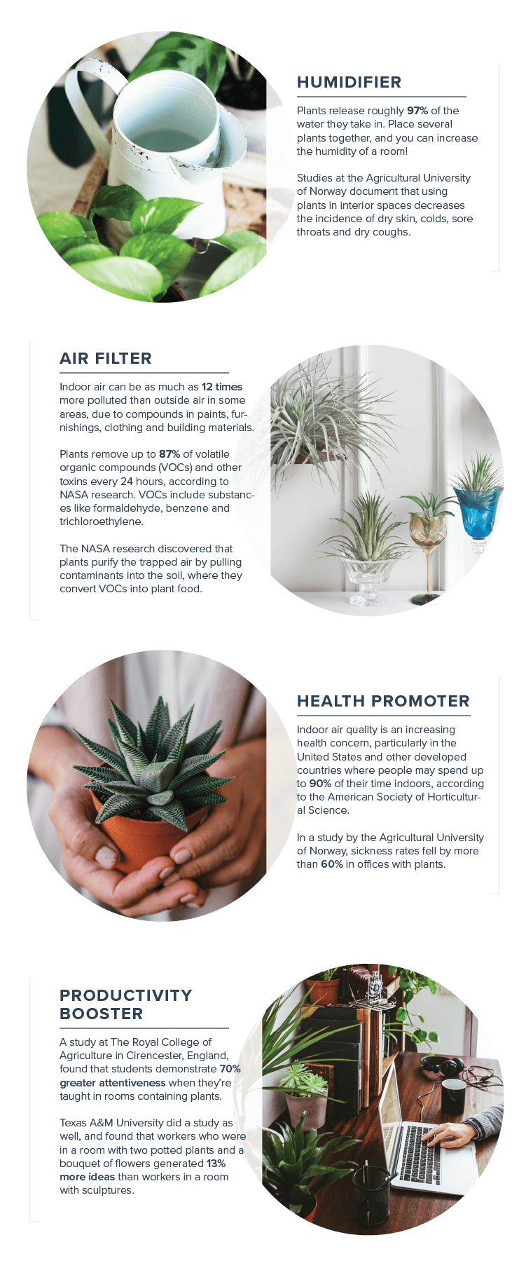 office-plants-benefits