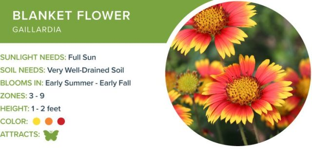 best perennials for sun
