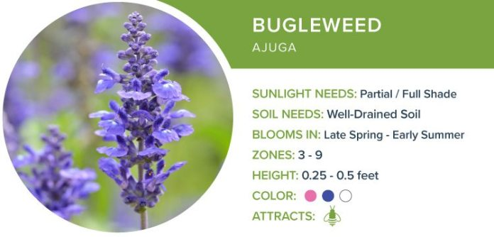 best perennial flowers for shade