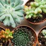 11 Colorful Succulents To Make Your Garden Pop Proflowers