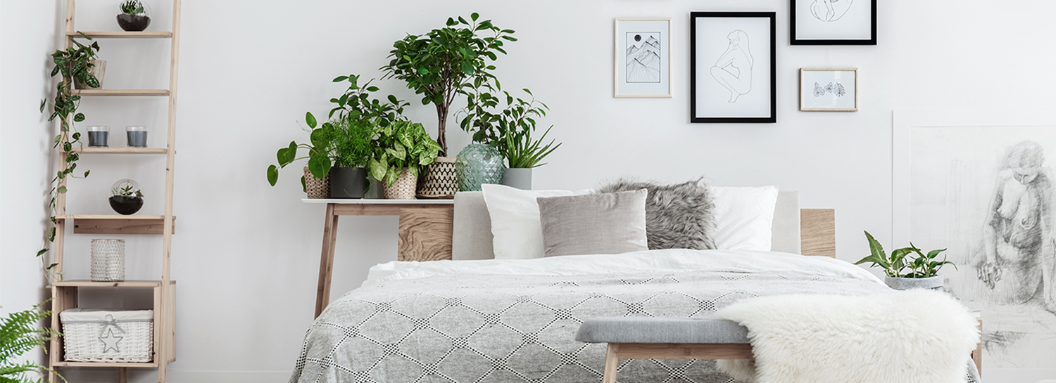 18 Plants That Help You Sleep Better Than Ever Proflowers