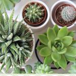 11 Adorable Mini Succulents Uses Growing Tips Proflowers Blog