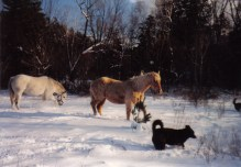 Trinity (white horse) Quincy (Palomino) Duke (black dog)