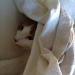 Gus Bennett under blanket