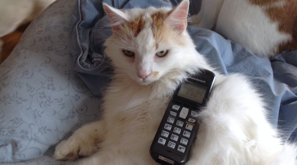 Sazar kitty making a phone call