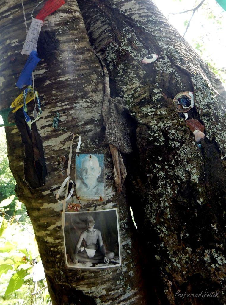 Cosa vedere nella Montagna Pistoiese: l'albero con gli occhi di Tiziano Terzani