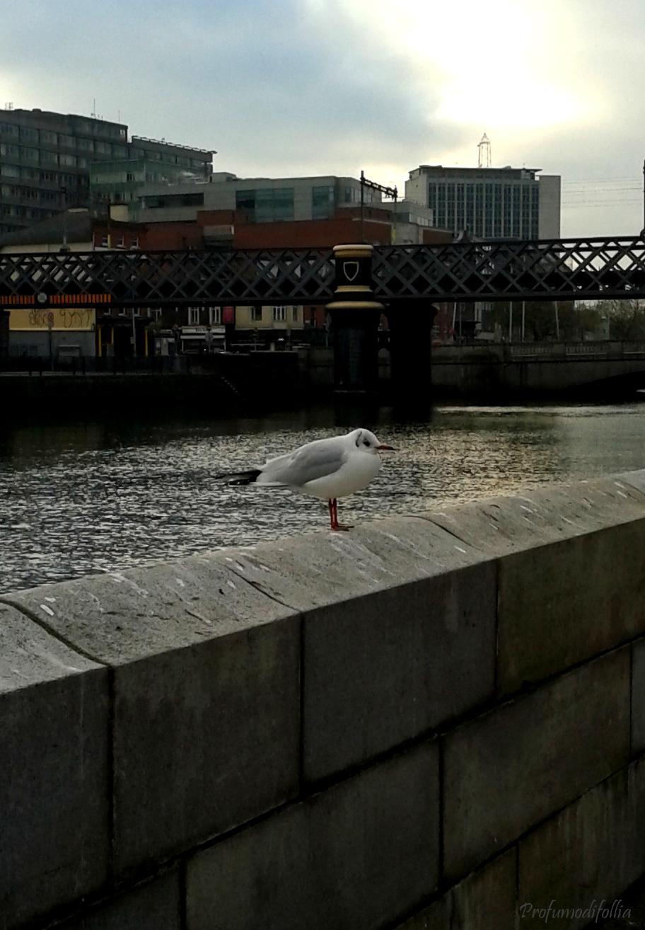 Uccellino sul ponte del Liffey
