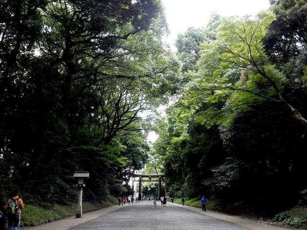 tempio meiji jingu barili sakè