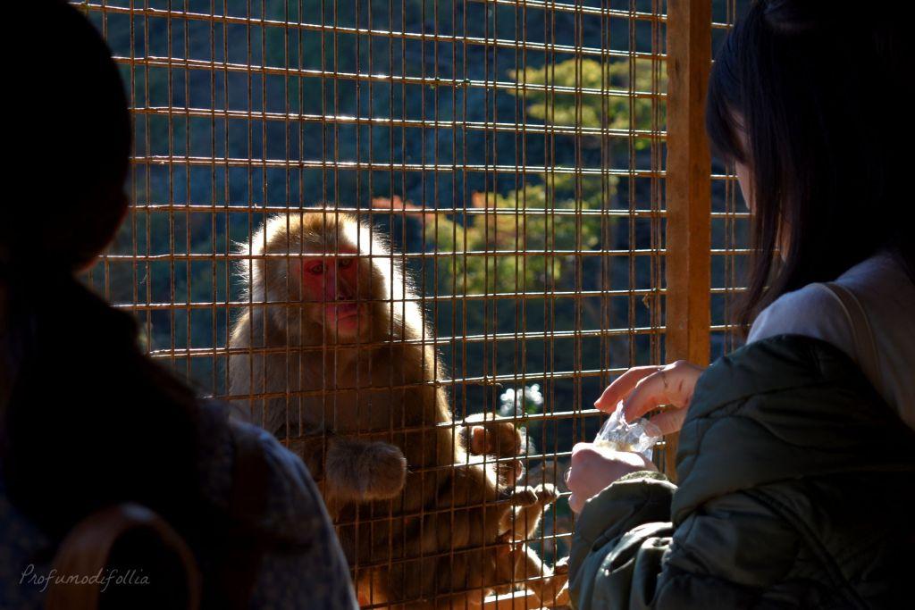 Visita ad Arashiyama: un macaco prende del cibo attraverso la rete della riserva