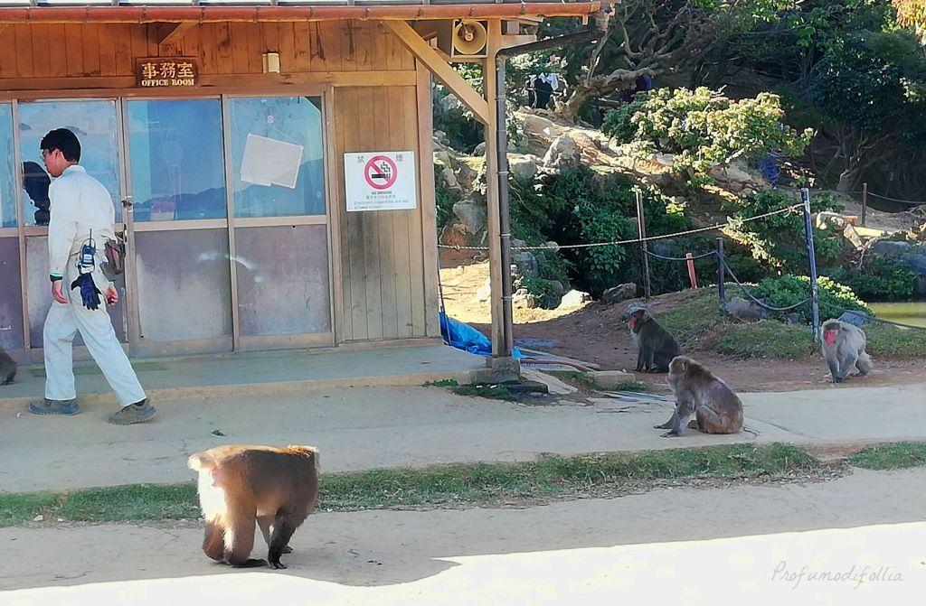 Visita ad Arashiyama: la riserva dei macachi giapponesi