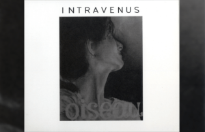 Intravenus - Oiseau