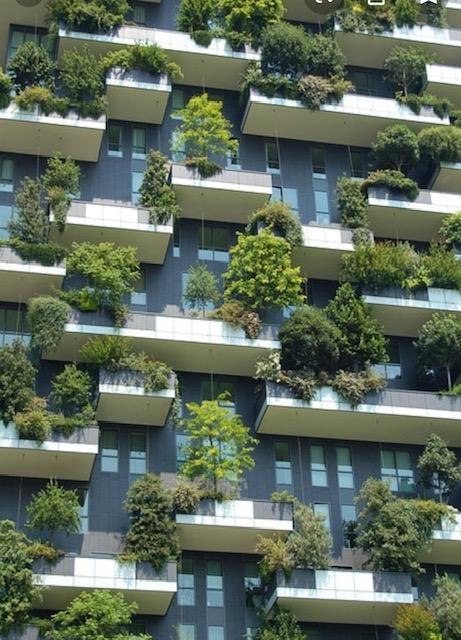 Il verde su le palazzine
