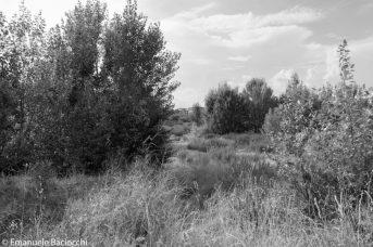 Quartiere Novoli. Terreno abbandonato dietro il parco di San Donato.
