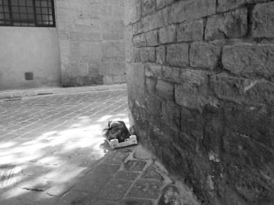 Firenze. Foto © Grazia Galli