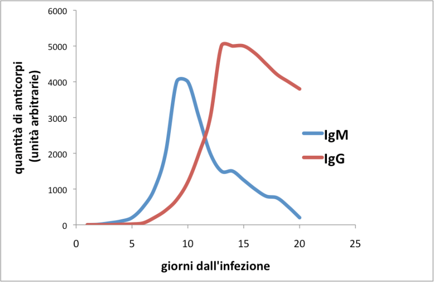 anticorpi cinetica