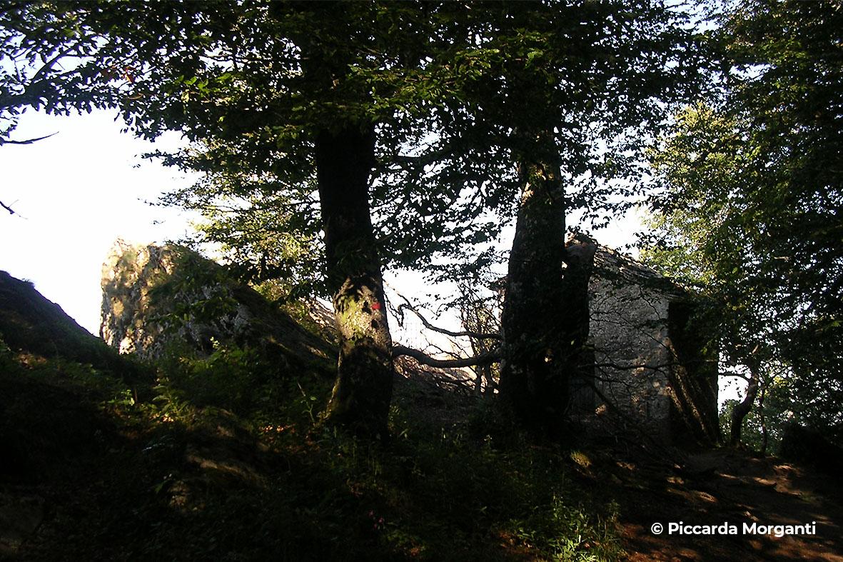 monte penna - Progettoidea chiusi della verna (©piccarda morganti)