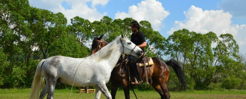 Transylvania Horse Show Romania