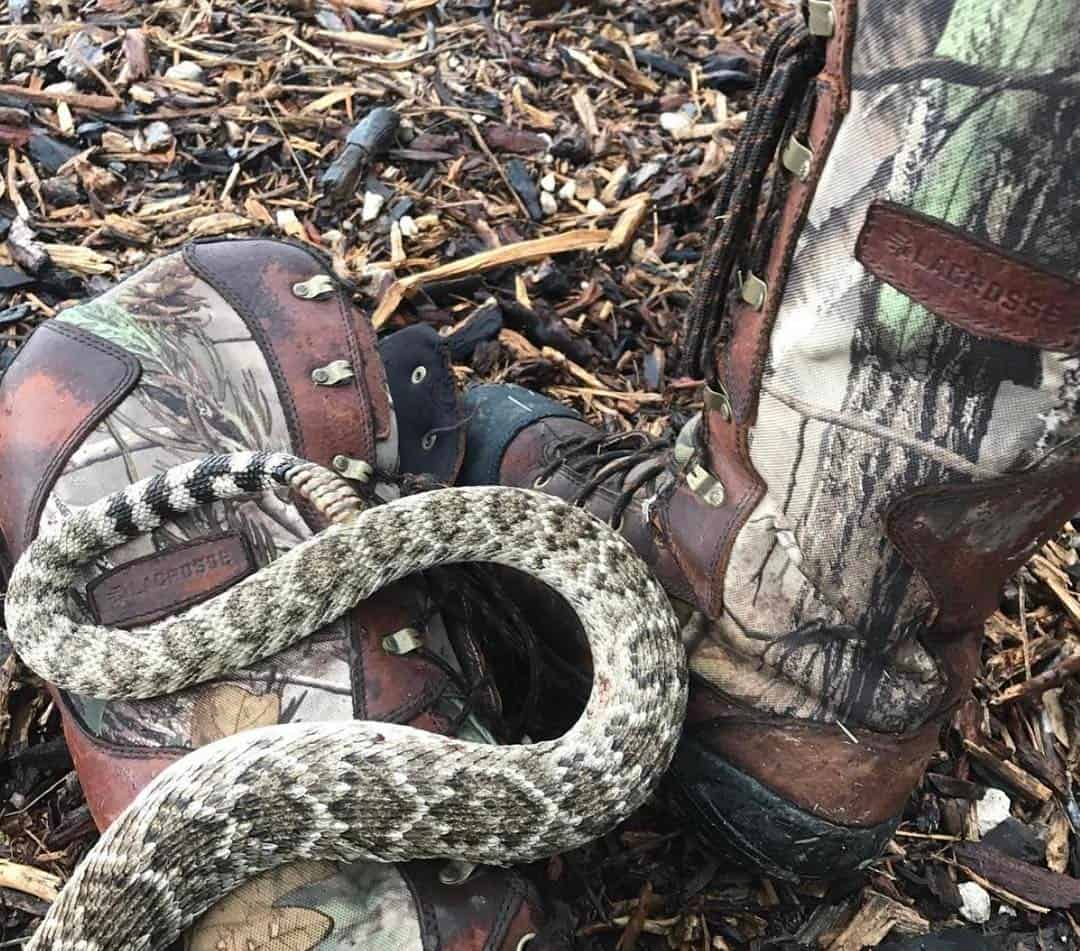 LaCrosse Venom Scent APG HD Snake Boot Review