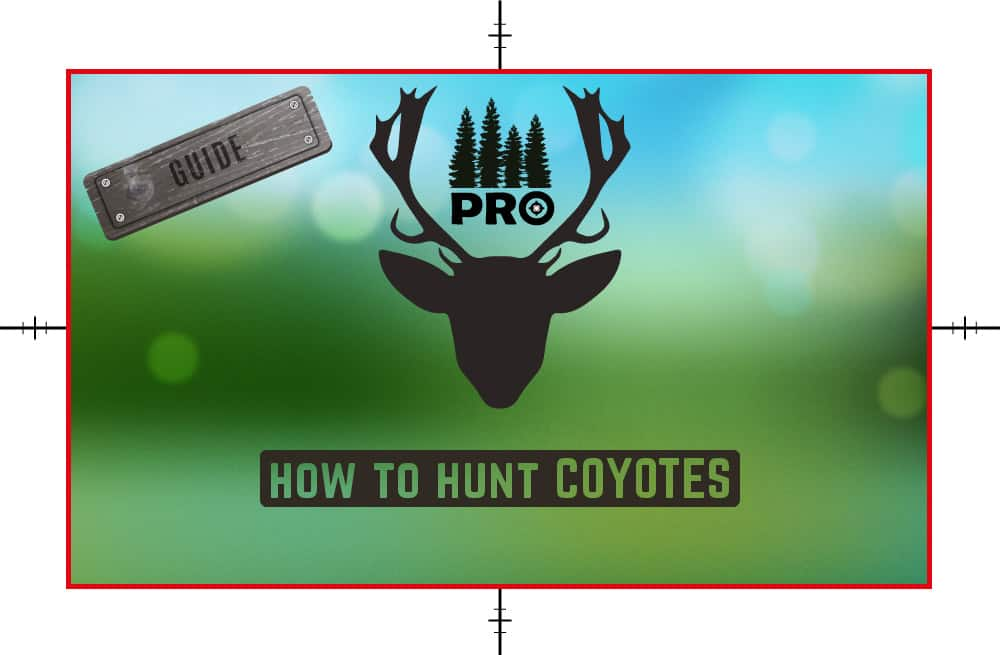 How to Hunt Coyotes - Coyotes Hunting Tips - proHuntingHacks