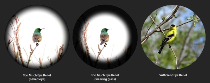 Eye Relief of Binoculars Explained