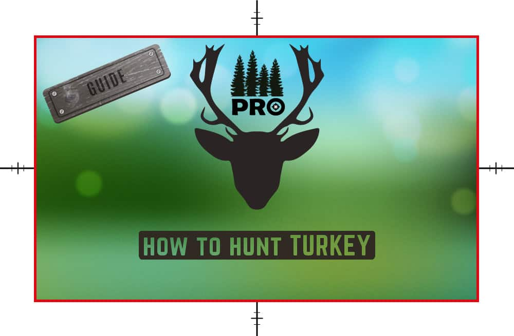How to Hunt Turkey - Turkey Hunting Tips - proHuntingHacks