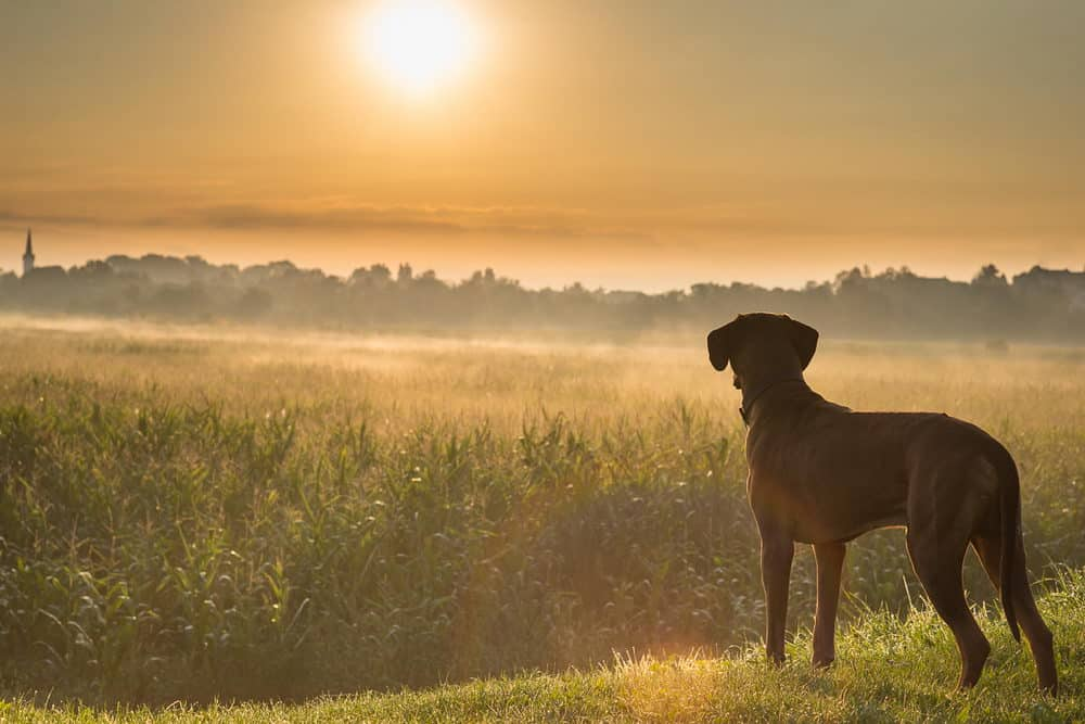 Gun Dog Training Tips - ProHuntingHacks