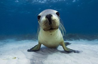 6-portrait_jorgenrasmussen_wannaplay-australiansealion-best-ocean-animal-photos-of-2013-6740x440