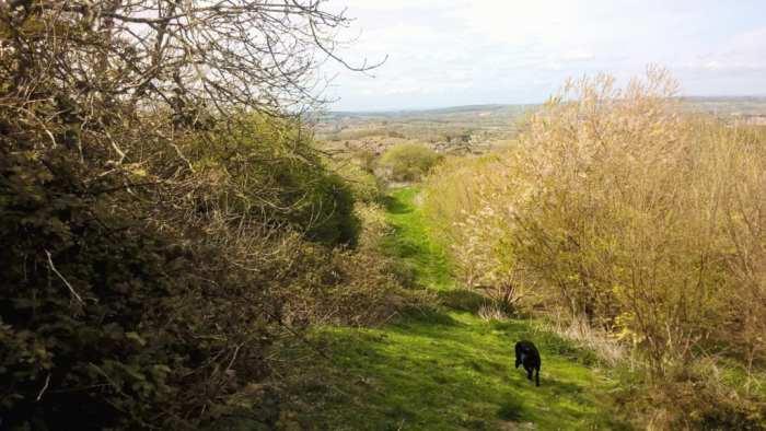 Les' dog walk path around Shanklin
