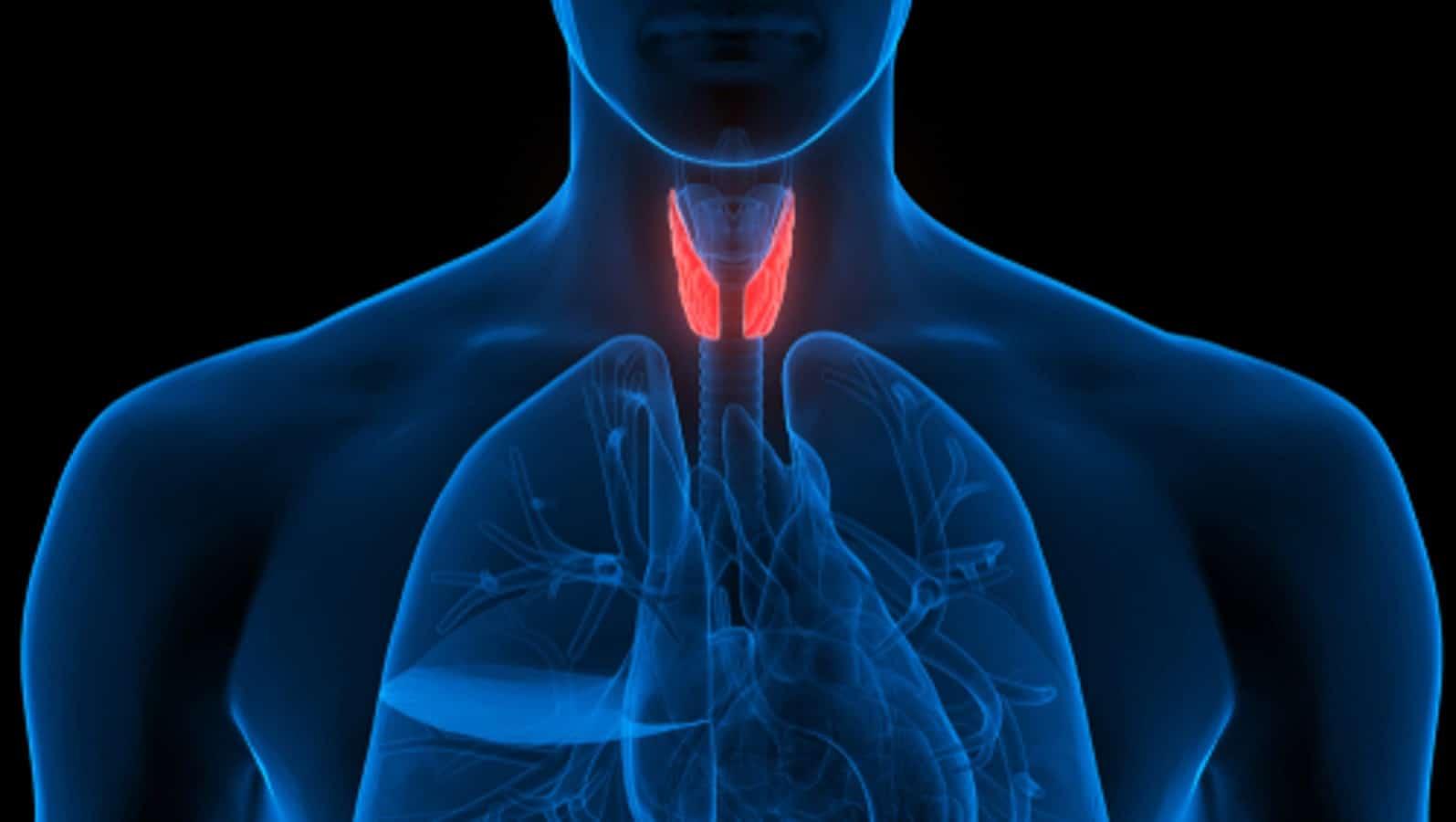 Stu S On Cbd And Endocrine Disorders