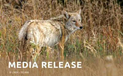 Mendocino County Suspends Contract with Rogue Federal Wildlife-Killing Program