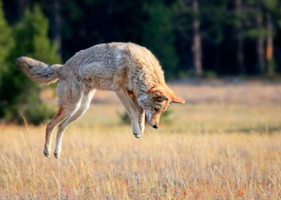 Ban on Wildlife Killing Contests Moves Forward
