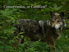 WOLF_conservation_curation-240