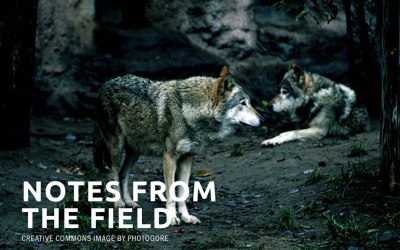 Delisting wolves was a mistake (OPINION)