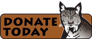 bobcat donation button