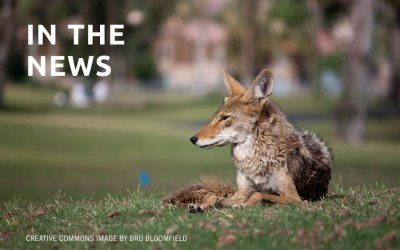 Marin wildlife experts rally against rodenticides after dead coyote linked to poison
